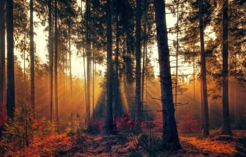 Syksyinen metsämaisema